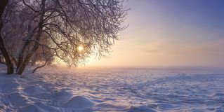 Paisaje del invierno por la tarde en la puesta del sol Nieve, helada en enero Antecedentes de la naturaleza del invierno Árboles  fotografía de archivo libre de regalías