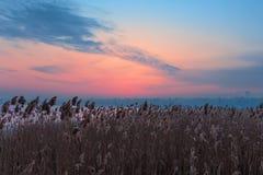 Paisaje del invierno, puesta del sol colorida roja sobre Cane Field imagenes de archivo