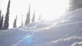 Paisaje del invierno que sorprende con las altas piceas y derivas, nieve, efectos de la llamarada de la lente durante las nevadas almacen de video