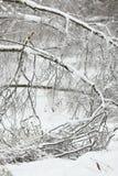 Paisaje del invierno Ramas de árbol caidas bajo el peso de la nieve Imagen de archivo libre de regalías