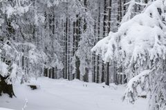 Paisaje del invierno, ramas heladas de los árboles, mucha nieve imagenes de archivo