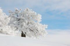 Paisaje del invierno, Ucrania -3 Imagen de archivo