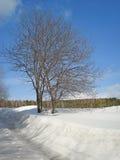 Paisaje del invierno Un árbol al borde de un campo cerca del camino f Fotografía de archivo