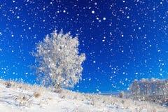 Paisaje del invierno un panorama con el cielo azul, un campo y un árbol Imagen de archivo