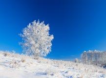 Paisaje del invierno un panorama con el cielo azul y el un árbol Fotos de archivo