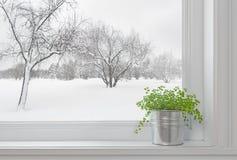 Paisaje del invierno visto a través de la ventana, y planta verde Imagen de archivo libre de regalías