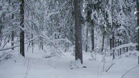 Paisaje del invierno W metrajes