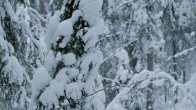 Paisaje del invierno W almacen de video