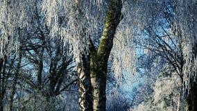 Paisaje del invierno y nieve que cae almacen de video
