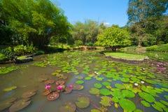 Paisaje del jardín botánico Fotos de archivo