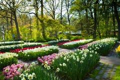 Paisaje del jardín de la primavera Fotografía de archivo libre de regalías