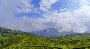 Paisaje del jardín de té con la nube Imagenes de archivo