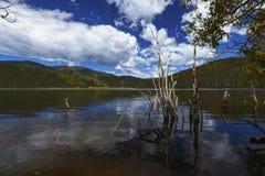 paisaje del lago con el árbol decaído imágenes de archivo libres de regalías