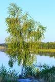 Paisaje del lago del verano de la tarde Imágenes de archivo libres de regalías