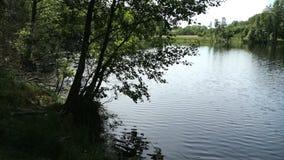 Paisaje del lago en tiempo de verano Campo en Havelland en Alemania almacen de video