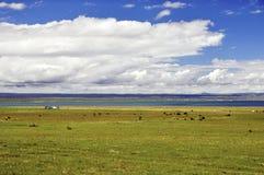 Paisaje del lago summer imagenes de archivo