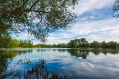 Paisaje del lago summer con los árboles y el arbusto verdes, Woking, Surrey fotos de archivo libres de regalías