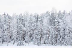 Paisaje del lago winter en Finlandia Imagenes de archivo