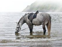 Paisaje del mar con el caballo. Fotos de archivo libres de regalías