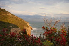 Paisaje del mar con las bayas rojas fotos de archivo