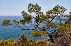 Paisaje del mar con un árbol Fotos de archivo
