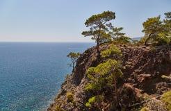 Paisaje del mar con un árbol - una foto 2 Foto de archivo libre de regalías