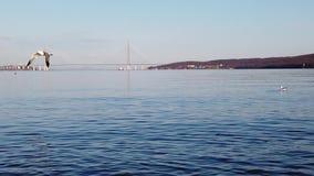 Paisaje del mar de la c?mara lenta con las gaviotas Belleza de la naturaleza almacen de video
