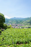 Paisaje del norte italiano con los viñedos Imagen de archivo libre de regalías