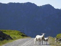 Paisaje del noruego de Lofoten fotos de archivo