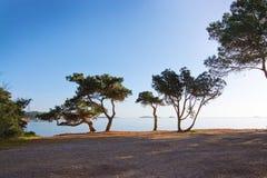 Paisaje del océano del árbol de pino de Ibiza imagen de archivo libre de regalías