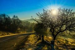 Paisaje del otoño, árbol en el contraluz del sol, el llevar del camino Imágenes de archivo libres de regalías
