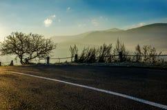 Paisaje del otoño, árbol en el contraluz del sol, el llevar del camino Imagenes de archivo