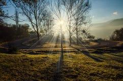 Paisaje del otoño, árbol en el contraluz del sol, el llevar del camino Foto de archivo libre de regalías