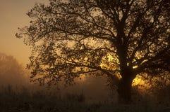 Paisaje del otoño, árboles en la niebla en el amanecer fotos de archivo
