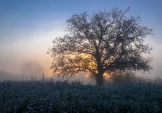 Paisaje del otoño, árboles en la niebla en el amanecer imagen de archivo libre de regalías