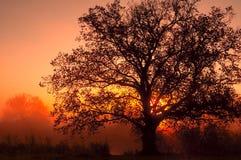 Paisaje del otoño, árboles en la niebla en el amanecer fotos de archivo libres de regalías