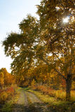 Paisaje del otoño. Foto de archivo