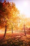 Paisaje del otoño Foto de archivo libre de regalías