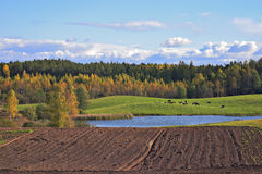 Paisaje del otoño. Imagen de archivo