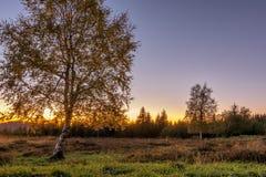 Paisaje del otoño - bosque negro Fotos de archivo libres de regalías