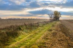 Paisaje del otoño - campo de cereal en la puesta del sol con el camino del campo, nube Fotos de archivo libres de regalías