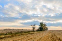 Paisaje del otoño - campo de cereal en la puesta del sol con el cielo nublado y el tr Fotografía de archivo libre de regalías