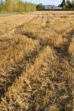 Paisaje del otoño, campo que se inclina Fotos de archivo