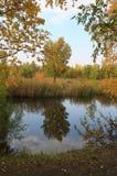 Paisaje del otoño: charca en el parque Foto de archivo