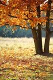 Paisaje del otoño con el árbol Fotos de archivo libres de regalías