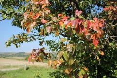 Paisaje del otoño con el árbol Imágenes de archivo libres de regalías