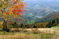 Paisaje del otoño con el árbol Foto de archivo libre de regalías