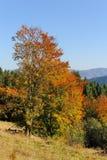 Paisaje del otoño con el árbol Fotografía de archivo libre de regalías