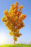 Paisaje del otoño con el árbol Imagenes de archivo