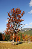 Paisaje del otoño con el árbol Fotos de archivo